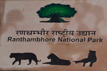 Latest from Ranathambore